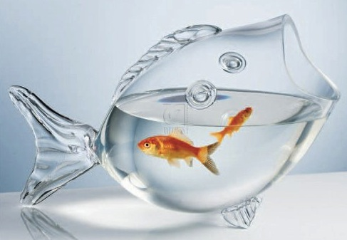 goldfish fish bowl Fish Shaped Fish Bowl
