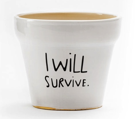 i will survive pot I Will Survive Plant Pot